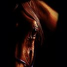 The eye of the horse (colored pencil drawing) by Monika Juengling