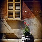 Vase, window and shadows by Silvia Ganora