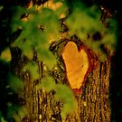 Natures own Valentine (wooden heart) by Alan Mattison