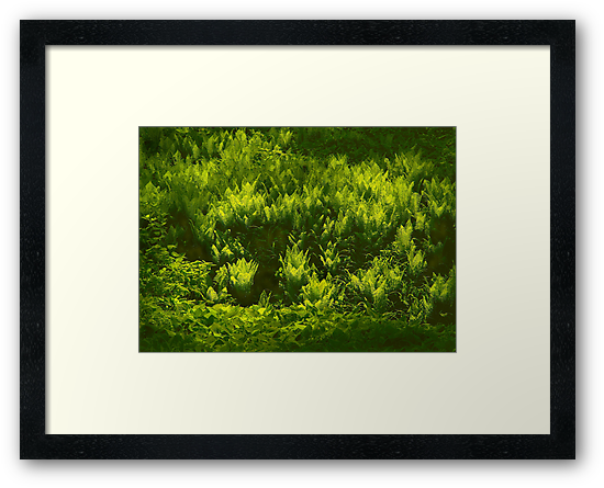 Ferns on the March bank by cclaude