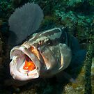 Grouper Cleaning Station by A.M. Ruttle