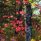 Autumn Dancing by Lisa G. Putman