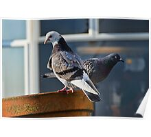 Potted Pigeons :) Poster