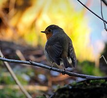 Close encounter of the bird kind by Javimage