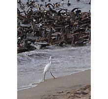 Crazy Times For Crazy Pelicans IV - Tiempos Locos Con Pelicanos Locos Photographic Print