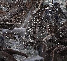 Pelican's Chaos - Chaos De Los Pelicanos by Bernhard Matejka