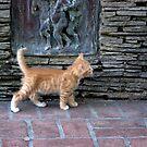 Little Tiger by Lynn Starner