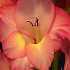 Gladiolus iPhone Case by Annlynn Ward