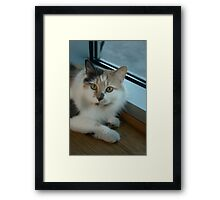 Buffy - Cat  Framed Print