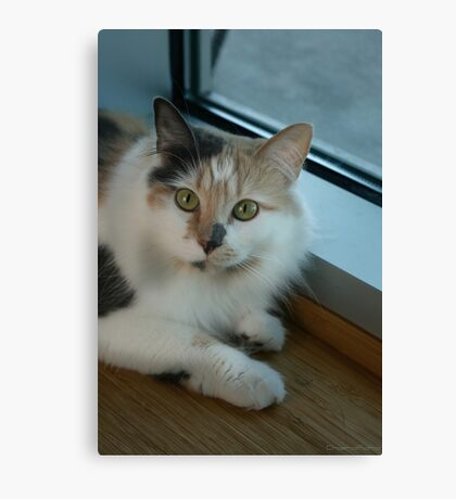 Buffy - Cat  Canvas Print