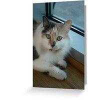 Buffy - Cat  Greeting Card