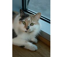 Buffy - Cat  Photographic Print