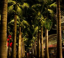 Under Palms by Kasia-D