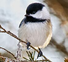 Chickadee by Heather King