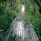 Path to Heaven on Earth by Nicole Barnes