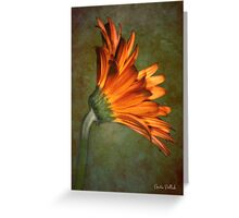 Daisy on an Antique Wall Greeting Card