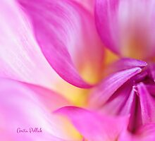 Soft Focus Dahlia by Anita Pollak