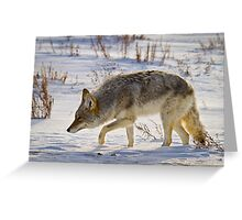 Coyote Hunting on Snow Greeting Card