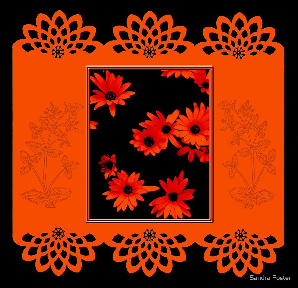 Orange Glowing Osteospernum by Sandra Foster