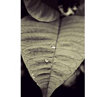Rain Drop Photographic Print