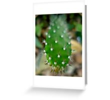 Prickly!!! Greeting Card