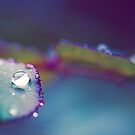 Perfect Droplet by Josie Eldred