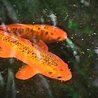 Two Koi by heatherfriedman
