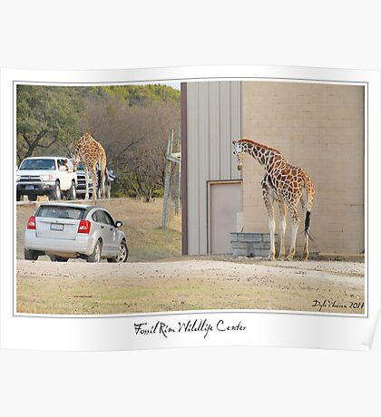 Fossil Rim Wildlife Center Poster