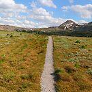 Sunshine meadows panorama II by zumi