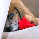 Travis' New Puppy by down23