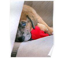 Travis' New Puppy Poster