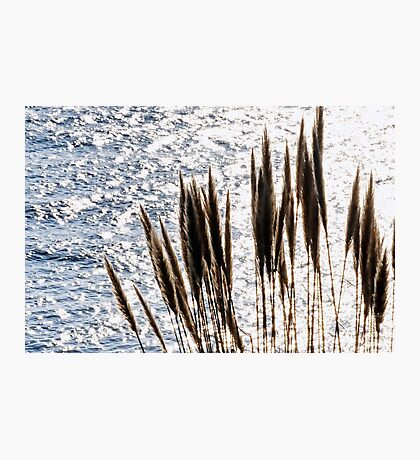 Pampas Grass Over Lyme Bay Photographic Print
