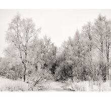 Frozen River and Birches Photographic Print