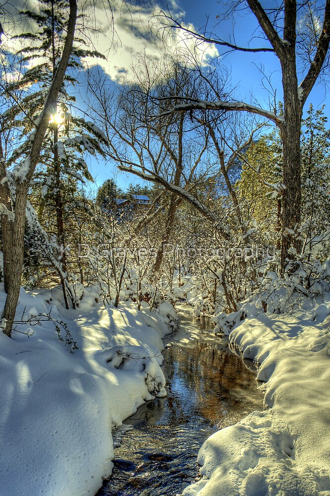 """"""" Snow, Sun, and Shadows"""" by Diana Graves Photography"""
