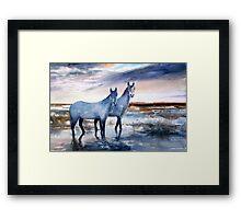 Carmargue ponies Framed Print