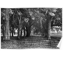 Trees Near The Visitor Centre, Phoenix Park, Dublin Poster