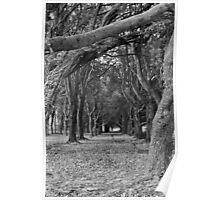 Trees near Phoenix Park School, Dublin Poster