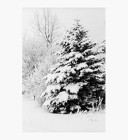 Snowy Photographic Print