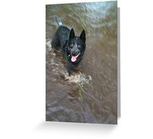 One Cool Blue Heeler Greeting Card