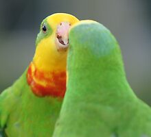 Two Superb Parrots by Ross Campbell