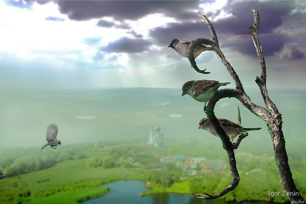 Birds Life by Igor Zenin