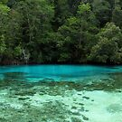 Jungle Pond by Dr Andy Lewis