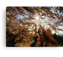 Fall in BC Canvas Print
