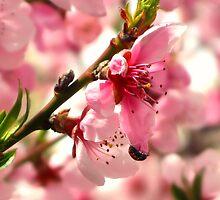 Lady Bug Pink by Brenda Dahl