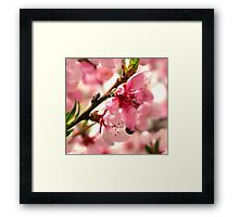 Lady Bug Pink Framed Print