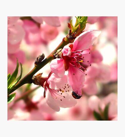 Lady Bug Pink Photographic Print