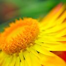 Sunset Beauty - Flower Photography by William Martin