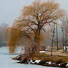 Tree at Cravath Lake by Gary Lengyel