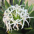 Grand crinum cluster by Mike Shell