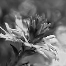 Black and White Flower Macro by William Martin